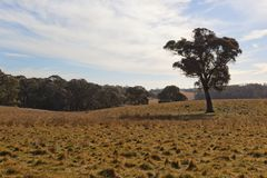A rural landscape. NSW, Australia. Royalty Free Stock Images