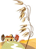 Rural landscape with oats ear. Rural landscape with ripe oats ear Royalty Free Stock Photography