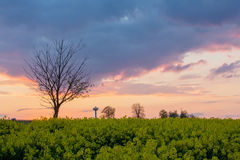 Rural landscape, oilseed field, bale of haystacks and sunse Royalty Free Stock Photos