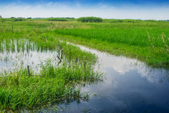 Rural landscape of paddy field Stock Photo