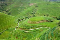 Rural landscape of paddy terraces Stock Image