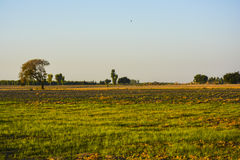 Rural Landscape Pakistan. Rural landscape somewhere in Khushab Pakistan Stock Images
