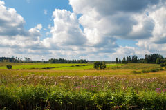 Rural landscape. Panorama meadow farm fields. Nature in summer. Wheat and mown grass. Big clouds. Rustic panoramic picture. Autumn meadow Royalty Free Stock Image