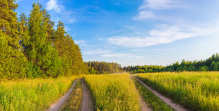 Rural landscape. Panorama Royalty Free Stock Image