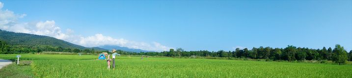 Rural Landscape Panorama With  Green Rice Fields