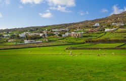 Rural landscape with pasture and sheep Royalty Free Stock Photo