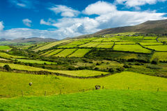 Rural Landscape With Pastures In Ireland Stock Photos