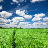 Rural landscape with path in the green field Stock Photo