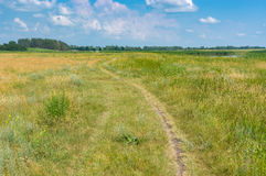 Rural landscape with path leading to pond in summer meadow Stock Photos