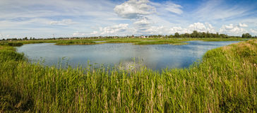 Rural landscape pond with grass Stock Image