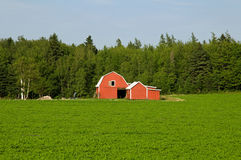 Rural landscape in Prince Edward Island Stock Photography