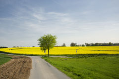 Rural landscape with rape field Royalty Free Stock Image