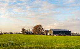 Rural landscape with a recently sown crop. And large barns. It is in the late afternoon of a sunny day in the Dutch fall season Royalty Free Stock Photo