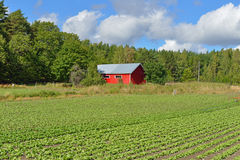 Rural landscape with red barn Stock Image