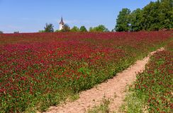 Rural landscape with red clover field, and church. Royalty Free Stock Images