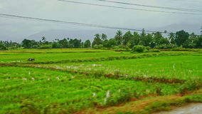 Rural landscape rice fields villages roads against cloudy Sky. View from road of rural landscape with water rice fields villages side roads scooters bus against stock footage