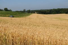 Agriculture, agronomy and farming background. Rural landscape with ripe wheat field on a foreground. Beautiful summer countryside nature background, Wisconsin stock photography