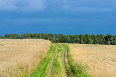 The rural landscape. Royalty Free Stock Images