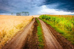 Rural landscape with road between two fields. Royalty Free Stock Images