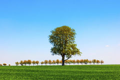 Rural landscape with a row of trees Royalty Free Stock Images