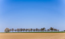 Rural landscape with row of trees Stock Images