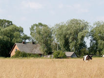 Rural landscape with the rural house and the grazed cow Stock Photo