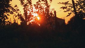 Rural Landscape With Setting Sun. And Tree Branches Moving By Wind stock video footage