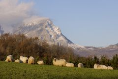 Rural landscape with sheeps in Navarre Stock Images