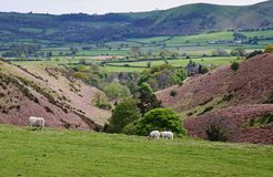 A Rural Landscape in Shropshire, England Stock Images