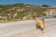 Rural landscape of Sithonia peninsula, Chalkidiki, Central Macedonia, Greece. Amazing rural landscape of Sithonia peninsula, Chalkidiki, Central Macedonia stock photography