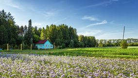 Rural landscape with a small house and lavender field flowers of Russia, the Urals Stock Photos