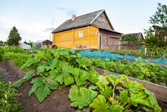 Rural landscape with small wooden house and vegetable garden Royalty Free Stock Photo