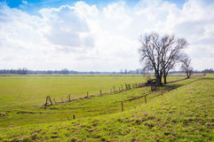Rural landscape with some bare trees. Agricultural landscape with grass, fences, trees and a low dike in the Netherlands Royalty Free Stock Images