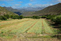 Rural landscape - South Africa Royalty Free Stock Image