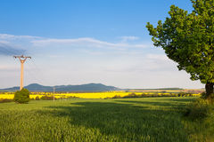 Rural landscape with spring fields Stock Images