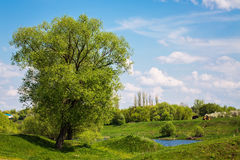 Rural landscape. In the spring sunny day Stock Photos