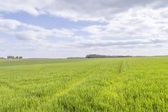 Rural landscape at spring time Royalty Free Stock Images
