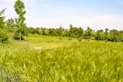 Rural landscape at spring time Royalty Free Stock Photo