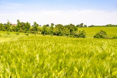 Rural landscape at spring time Royalty Free Stock Image