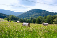 Rural Landscape with stacks of mown hay in Moravian-Silesian region in the Czechs republic Stock Photography