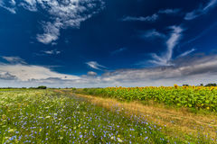 Rural landscape with storm clouds and sunflower, in summer Stock Photography