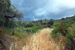 Rural landscape With Stormy Sky. A rural landscape with olive trees and wild grass, with dark blue stormy clouds and sky. Greece Royalty Free Stock Image