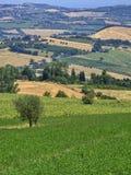 Summer landscape near Monterubbiano Fermo, Marches Royalty Free Stock Image