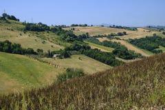 Summer landscape near Monterubbiano Fermo, Marches Royalty Free Stock Photo