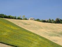 Summer landscape near Monterubbiano Fermo, Marches Stock Image