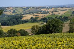 Summer landscape in Marches near Fossombrone Stock Photography