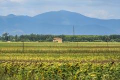 Summer landscape near Volterra, Tuscany Stock Photography