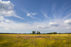 Rural landscape in summer day Royalty Free Stock Images
