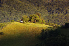 Rural Landscape. Summer morning in the carpathian villages Stock Images