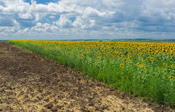 Rural landscape at summer season Royalty Free Stock Photos